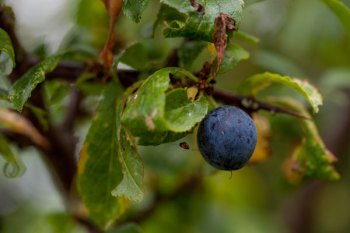 Sloes, snows, flows: Sep 2015-March 2016