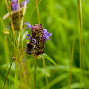 bee on self heal