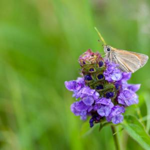 skipper on self heal